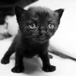 ČESTITAMO OD SRCA: Danas se u svetu obeležava dan crnih mačaka