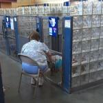 SJAJNO: Žena čita starim psima u azilu kako bi se osećali manje usamljeni!
