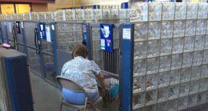 Žena čita starim psima petface