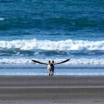 PRAVA MAGIJA: fotografije pasa uslikanih u pravom trenutku