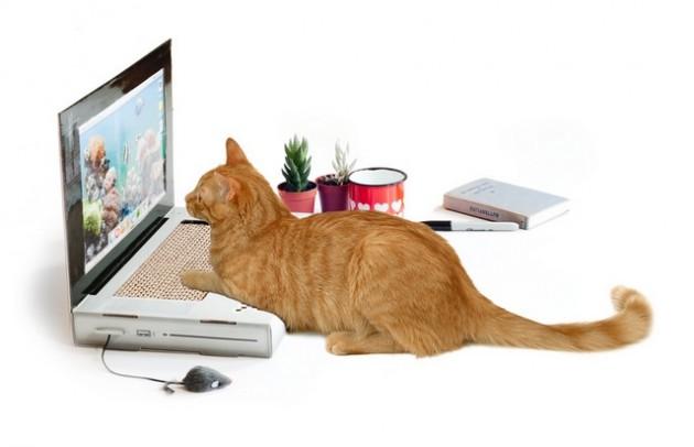 laptop za mačke petface