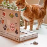 POTPUNI HIT:  laptop za mačke – način da obradujete svoju ljubimicu