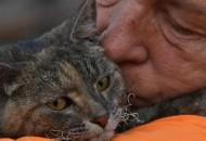 mačka je uspela da se spasi iz požara petface