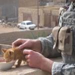 NAJBOLJI PRIJATELJI KAD JE NAJTEŽE: mačke i vojnici ujedinjeni u ratu