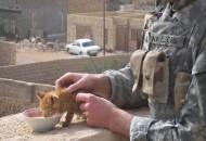 mačke i vojnici petface
