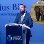 ZA PRIMER: Leonardo DiCaprio donira milion dolara za zaštitu slonova od krivolovaca!