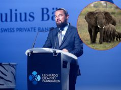 milion dolara za zaštitu slonova petface