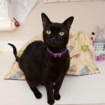 PRAVA ENIGMA: mačak se posle 3 godine vratio kući, a nakon toga je ponovo nestao