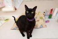 mačak se posle 3 godine vratio kući petface