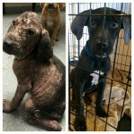 DIVNOOO: napušteni štenci sada čekaju novi dom