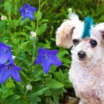 INSPIRACIJA DANA: Bob, napušteni pas, konačno je našao svoj dom