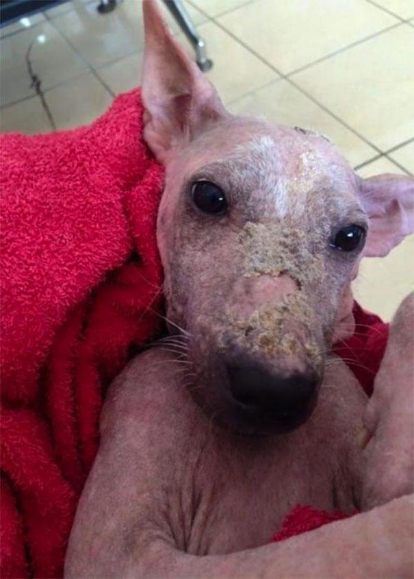 spašavanje napuštenog psa petface