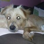 KRALJEVO: Boni je paralizovan pas, koji će se naći na ulici jer je Grad tako rešio!