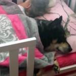 KAKAV TANDEM: pas i beba dremaju (VIDEO)