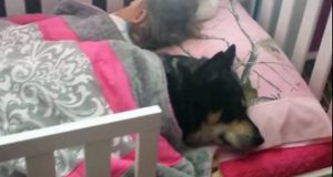 pas i beba dremaju petface