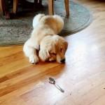 ENIGMA DANA: Zašto se ne vole pas i kašika?! (VIDEO)