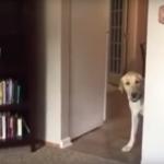 NEUSTRAŠIVOST NA DELU:  ovaj pas ima strah od tepiha i spreman je da ga savlada