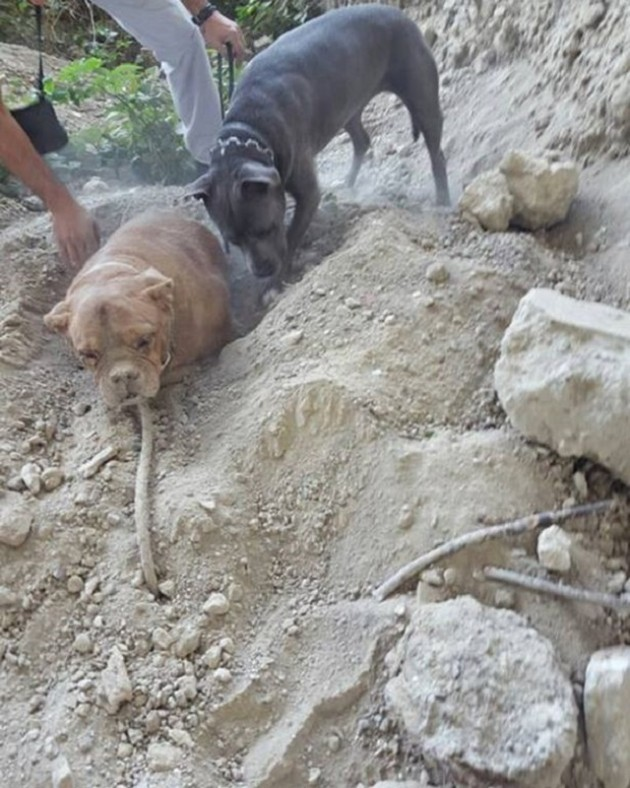 pas koji je zakopan živ petface
