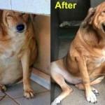 On je bio ulični pas sa prekomernom težinom, a onda se sve promenilo kada su ga našli dobri ljudi