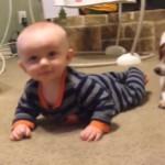 KAKAV PRIZOR: pas uči bebu da puzi (VIDEO)