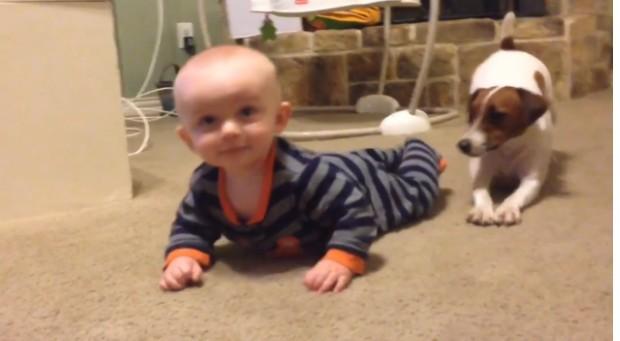 pas uči bebu da puzi petface2