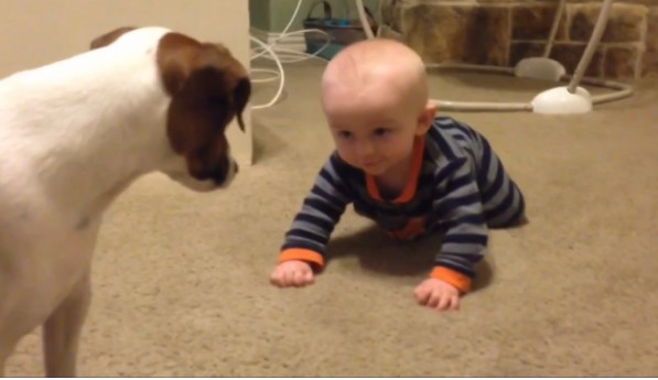 pas uči bebu da puzi petface