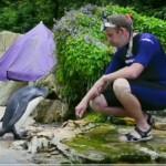 NESVAKIDAŠNJE: pingvin koji uči da pliva (VIDEO)