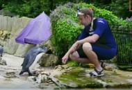 pingvin koji uči da pliva petface