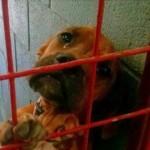 Sećate se psa koji je zaplako u azilu? UDOMLJEN JE!