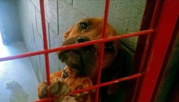 psa koji je zaplako u azilu petface