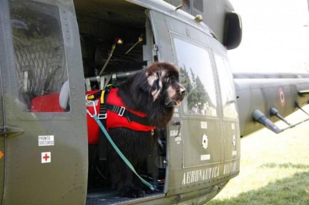 psi spasioci petface