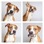PRAVI MANEKENI: psi u azilima iskusno pozirali pred aparatom