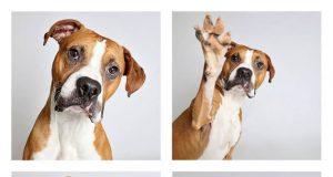 psi u azilima petface