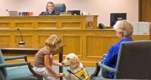 psi u sudnici petface