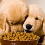 OTKRIVAMO: Koja je razlika u boji na hrani za pse?