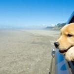 Prvi put sa psom na letovanje – automobilom!