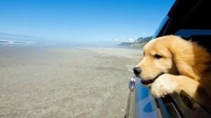 sa psom na letovanje petface