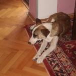 NIŠ: Stefanija je spasila psa sa ulice, a sada treba našu pomoć!