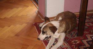 spasila psa sa ulice petface