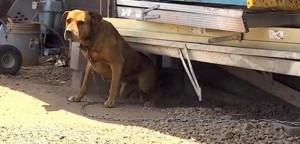 pas koji je ceo život proveo zavezan petface