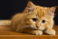 Šećer i mačke friskies petface