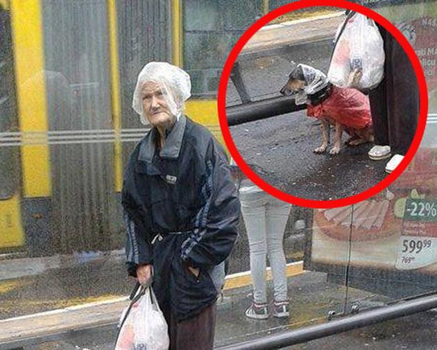 zaštitila svog psa petface