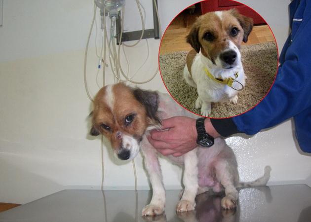 Pas spašen iz azila petface