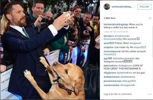 Instagram profil posvećen PSIMA petface