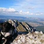 OD PLJEVLJA DO ŽABLJAKA: Irac i njegov labrador neumorno koračaju za živote bolesne dece
