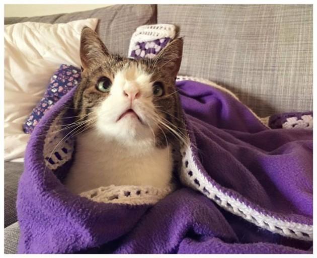 Mačka sa Daunovim sindromom petface