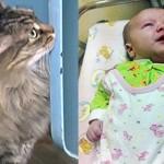 Mačka Maša spasila bebu, ostavljenu pored kontejnera! (VIDEO)