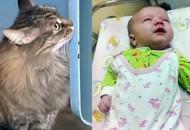 Mačka spasila bebu petface