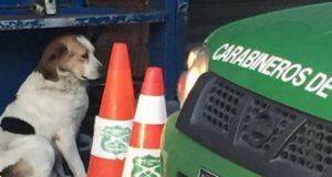 Pas čuvao telo preminulog vlasnika petface