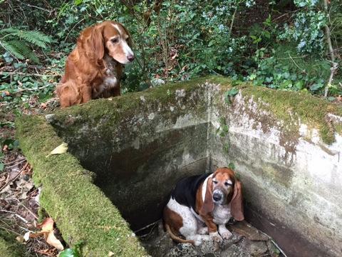 Pas nedelju dana čuvao drugaricu petface